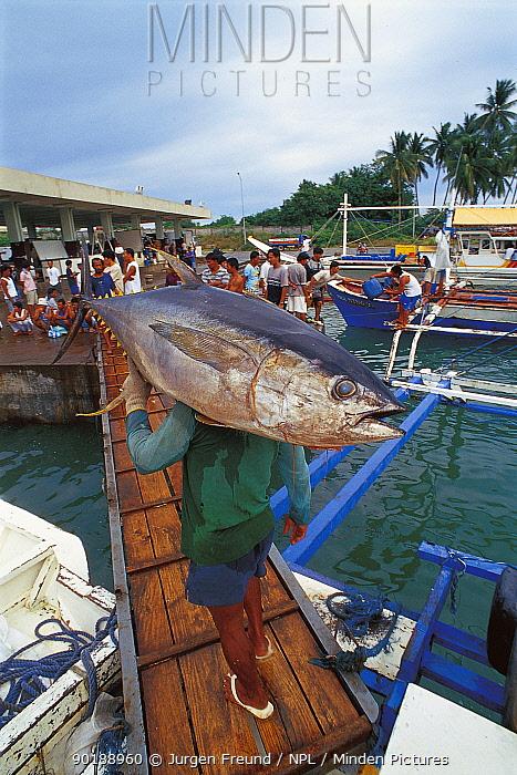Yellowfin tuna catch being carried to fish market, Philippines  -  Jurgen Freund/ npl