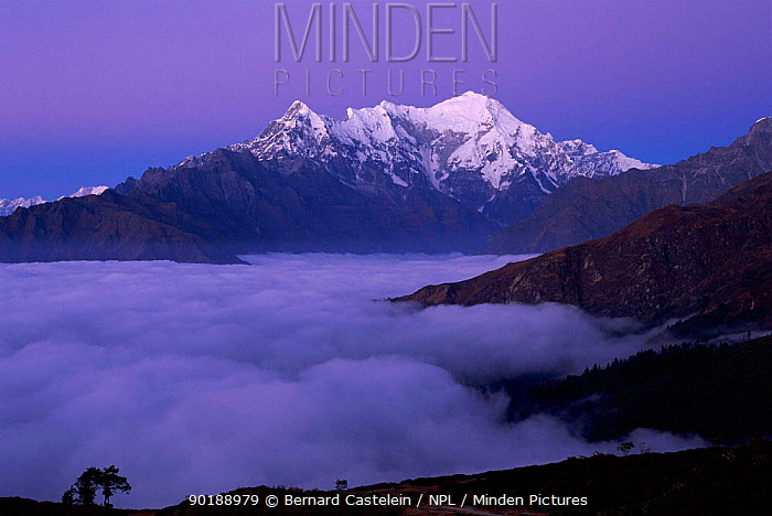 Langtang ridge at dawn seen from Laurebina Yak (4000metres) Langtang NP, Nepal  -  Bernard Castelein/ npl