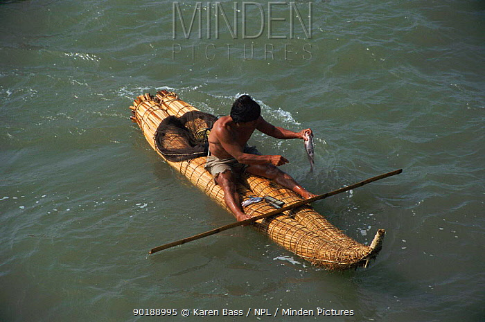 Fisherman in traditional reed boat with bamboo paddle Pimental, Pacific coast, Peru, South America  -  Karen Bass/ npl