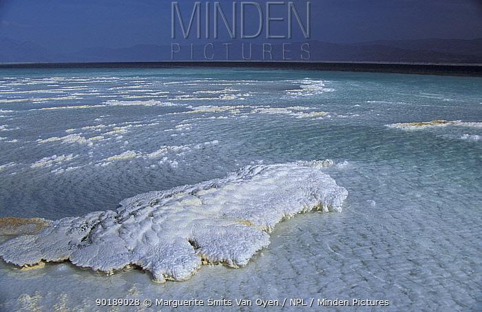 Lac Assal, crystallised salt on shoreline, 150m below sea level Djibouti, East Africa sea water  -  Marguerite Smits Van Oyen/ npl