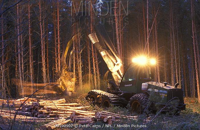Forest harvesting machine felling Scots pines (Pinus sylvestris) at night, UK  -  Pete Cairns/ npl