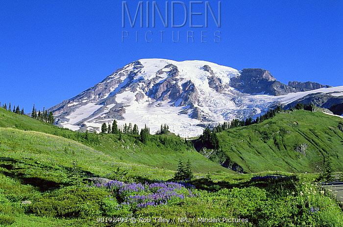 Paradise park, Mount Rainier National Park, Washington, USA  -  Rob Tilley/ npl