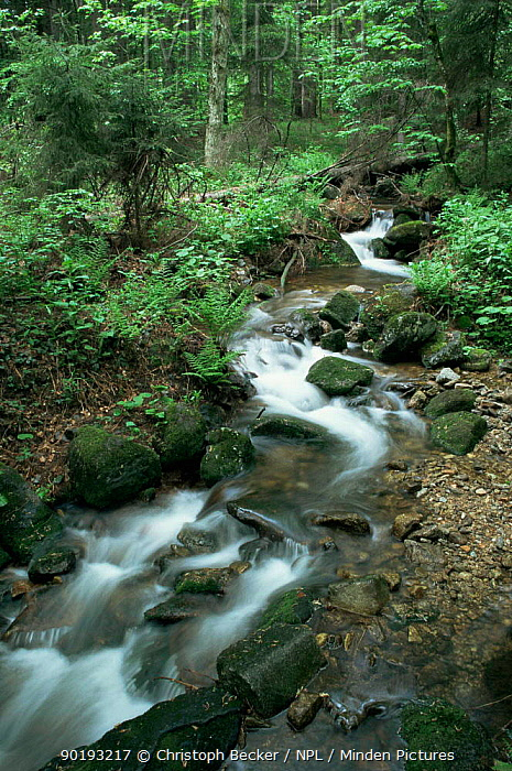 Mountains stream running through Bavarian Forest NP, Germany  -  Christoph Becker/ npl