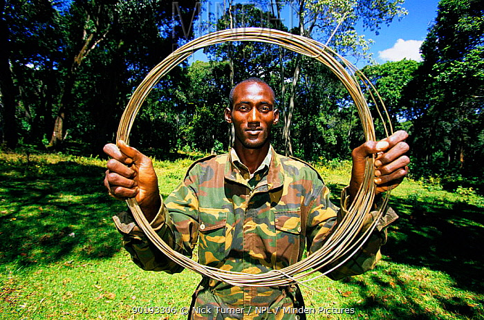 Kenyan Wildlife Service ranger with poachers buffalo snare, Mount Elgon NP, West Kenya 2002  -  Nick Turner/ npl