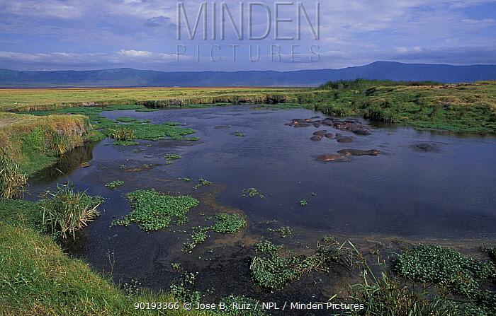 Ngorongoro crater NP with Hippopotamus in river, Tanzania  -  Jose B. Ruiz/ npl