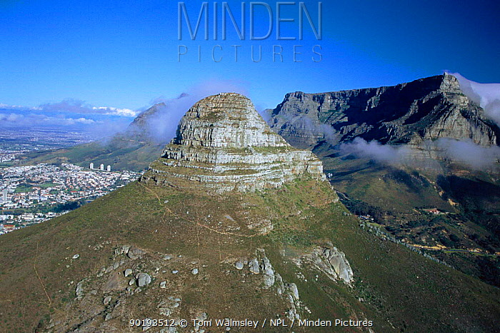Lions Head and Table mountain, Cape Town, South Africa  -  Tom Walmsley/ npl