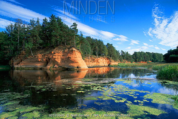 Sandstone cliffs on River Salaca, nr Ainazi, Latvia  -  Niall Benvie/ npl