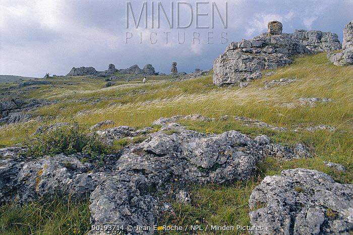 Eroded rocks on exposed hillside, Causses, Tarn, France  -  Jean E. Roche/ npl