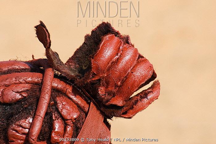 Himba woman hair decoration, Kaokoland, Namibia  -  Tony Heald/ npl