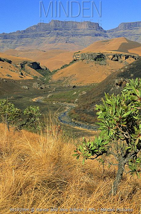 Giant Castle Game Reserve, Drakensberg, Natal, South Africa  -  Hanne & Jens Eriksen/ npl