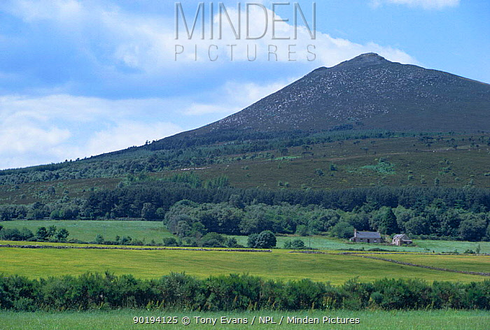Grampian region landscape with croft, woodland, moorland and mountain Scotland, UK  -  Tony Evans/ npl