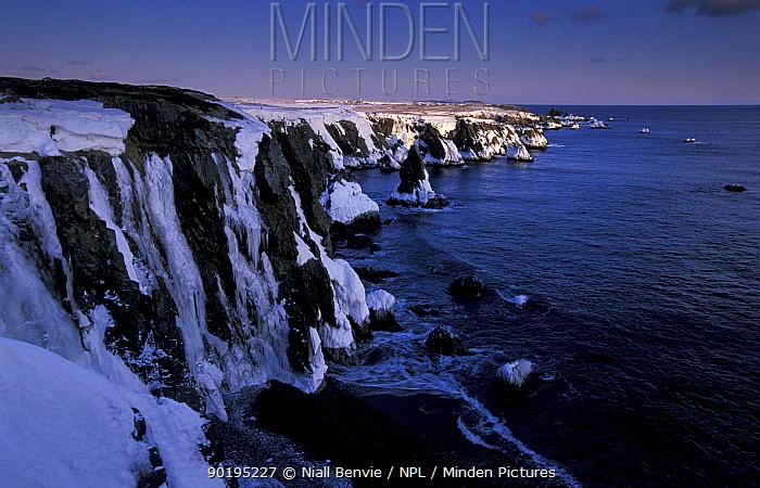 Ice coated sea cliffs, Bonavista peninsula, Newfoundland, Canada  -  Niall Benvie/ npl