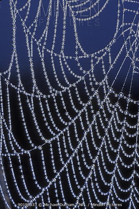 Dew droplets on spider's web, USA  -  Michael Durham/ npl