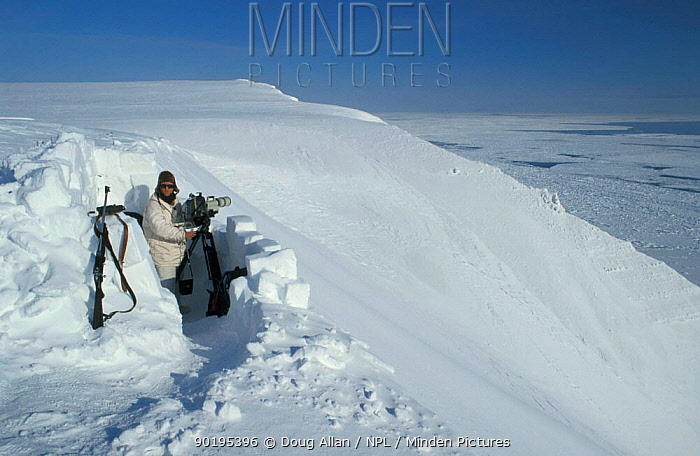 Cameraman Doug Allan filming Polar bears 1995 Churchill Canada  -  Doug Allan/ npl