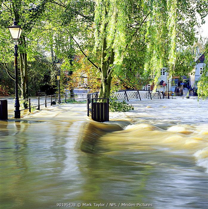 River Wey flooding over bridge, Guildford Surrey, UK  -  Mark Taylor/ npl