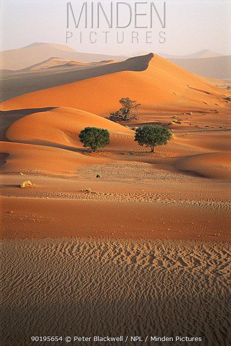 Sand dunes, Namib desert, Namibia, South Africa  -  Peter Blackwell/ npl