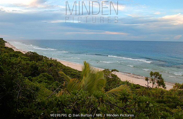 Coastal landscape, Henderson Is, Pitcairn Is, South Pacific  -  Dan Burton/ npl
