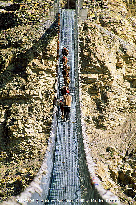 Mule train crosses bridge over Kali Gandaki gorge, Annapurna circuit, Nepal world's deepest gorge  -  Andrew Parkinson/ npl