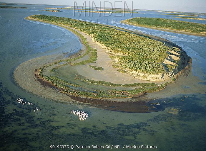 Laguna Madre with American white pelicans, Tamaulipas, Gulf of Mexico, Mexico  -  Patricio Robles Gil/ npl