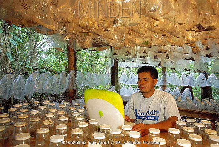Research worker involved in Caterpillar Inventory Program, Guanacaste, Costa Rica  -  Ingo Arndt/ npl