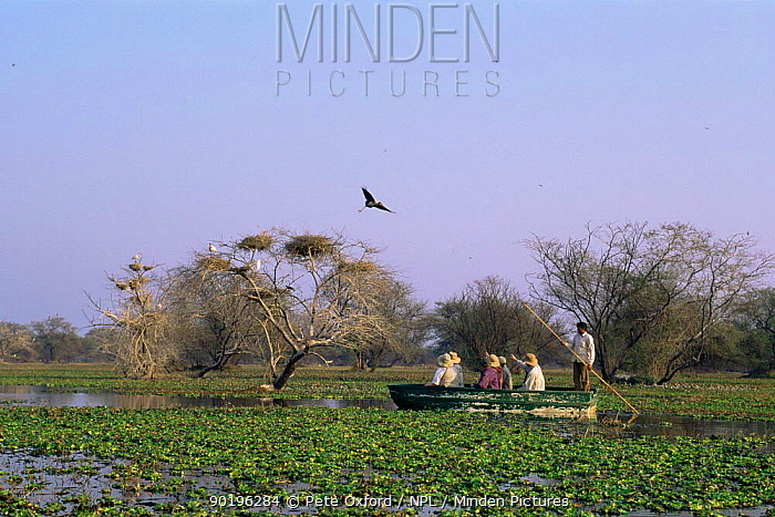 Bird viewing from boat, Keoladeo Ghana NP, Bharatpur, Rajasthan, India  -  Pete Oxford/ npl