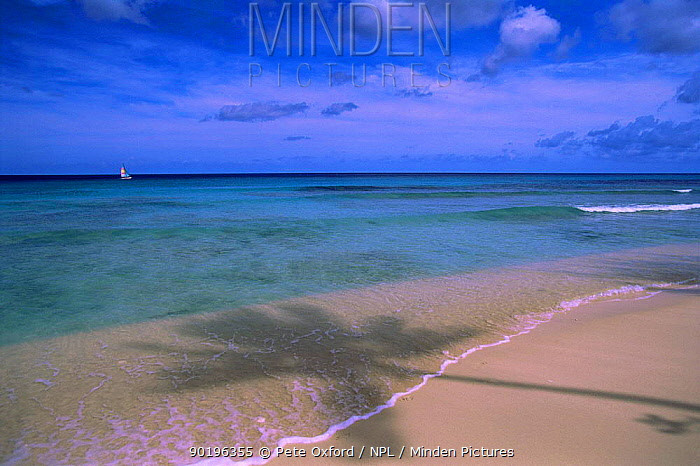 Tropical beach with shadow of palm tree, Barbados, Caribbean  -  Pete Oxford/ npl