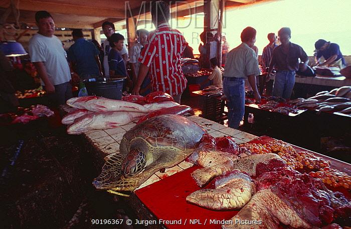 Sea turtle meat for sale in fish market, Indonesia  -  Jurgen Freund/ npl