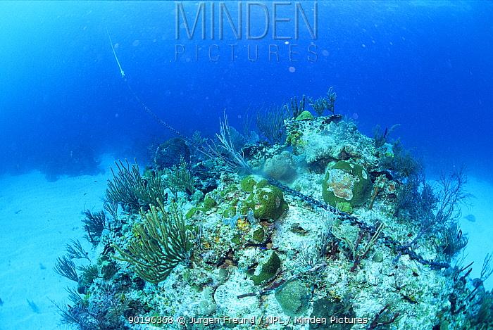 Anchor chain lying across coral reef, Bahamas  -  Jurgen Freund/ npl