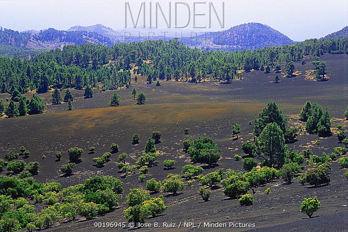 Vegetation on volcanic badland, El Hierro, Canary Islands  -  Jose B. Ruiz/ npl