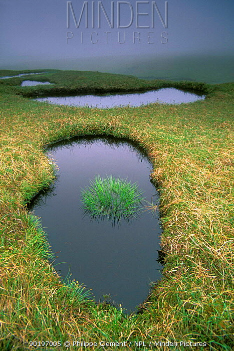 Bog on the moors of Hermaness Shetland Is Scotland  -  Philippe Clement/ npl