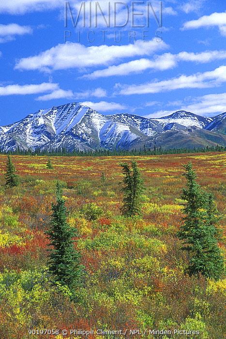 Mount McKinley mountain range and Denali NP landscape in autumn Alaska USA  -  Philippe Clement/ npl