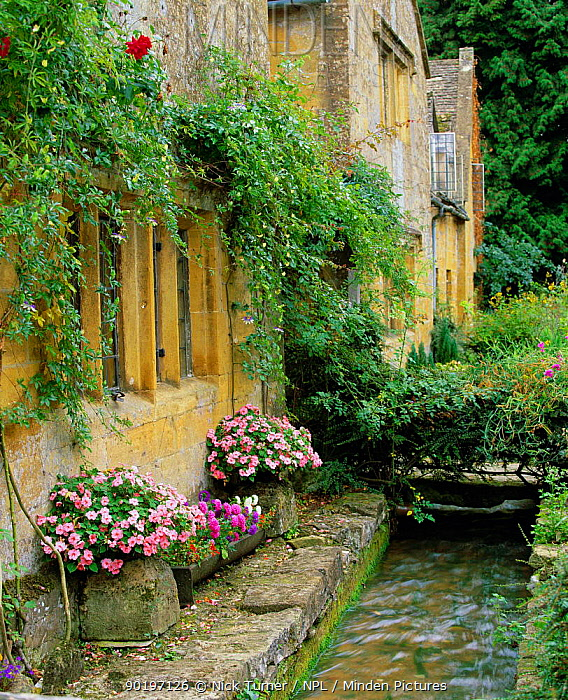 Village cottages with flowers and stream, Stanton, Cotswolds, Gloucestershire, UK 2003  -  Nick Turner/ npl