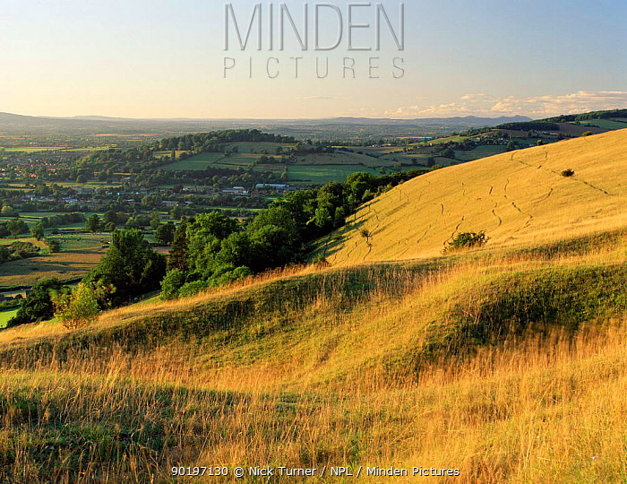Unimproved limestone grassland on Cotswold escarpment, Selsley Common, Gloucestershire, UK 2003  -  Nick Turner/ npl