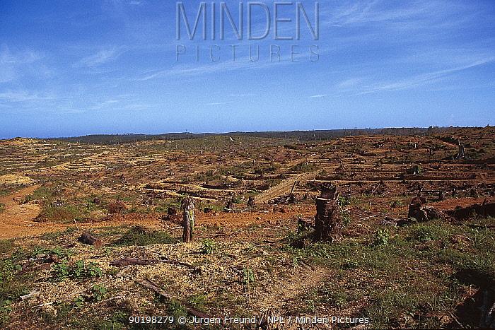Deforestation for oil palm plantations Philippines  -  Jurgen Freund/ npl