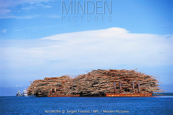 Tropical timber carried by barges at sea Philippines  -  Jurgen Freund/ npl