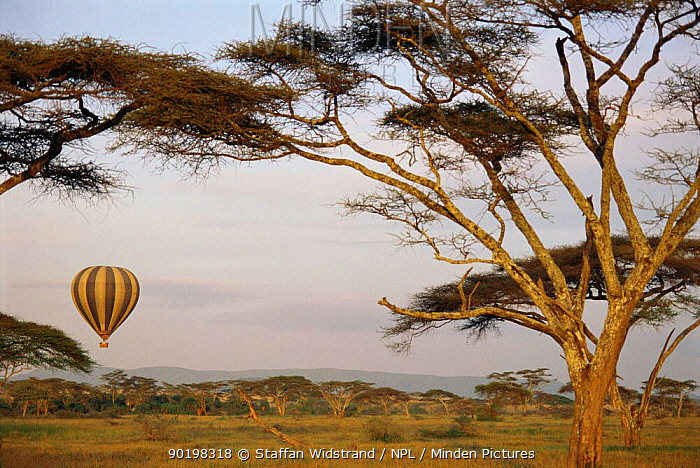 Tourists in Hot air balloon over the Serengeti NP, Tanzania, East Africa  -  Staffan Widstrand/ npl