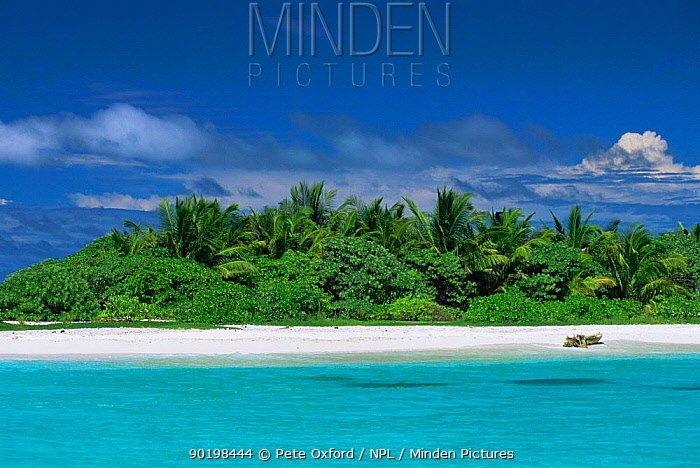 Shallow tropical waters off North Male atoll, Maldives, Indian Ocean  -  Pete Oxford/ npl