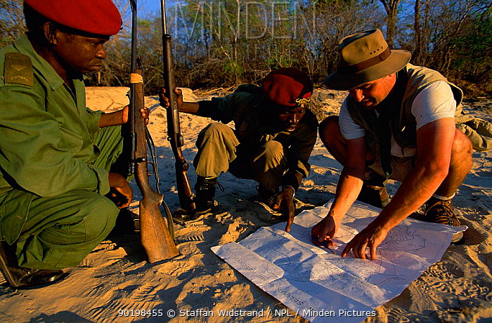 Game warden examines map with armed rangers, Selous GR, Tanzania  -  Staffan Widstrand/ npl