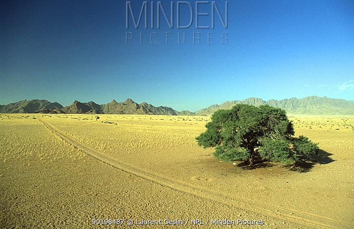 Vehicles tracks in sand, Etosha NP, Nambia  -  Laurent Geslin/ npl
