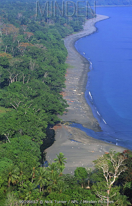 Aerial view of coast and Lowland forest, Vatthe conservation area, Espiritu Santo, Vanuatu, Melanesia  -  Nick Turner/ npl