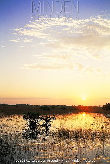 Red mangrove trees (Rhizophora mangle) at sunset, Everglades NP, Florida  -  Jurgen Freund/ npl