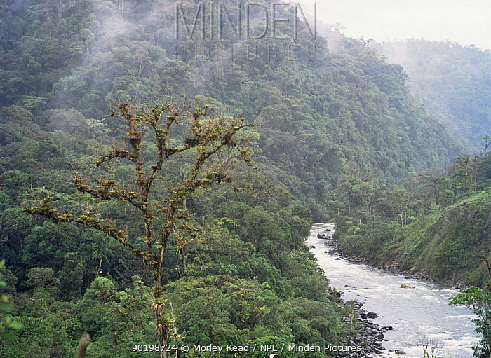 Primary rainforest of Napo Province, Ecuador  -  Morley Read/ npl