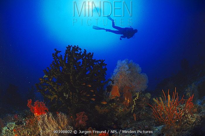Diver silhouetted above coral reef, Philippines  -  Jurgen Freund/ npl