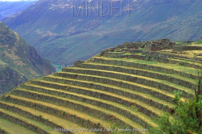 Inca terraces, Pisac, Urubamba Valley, Peru,  -  Pete Oxford/ npl