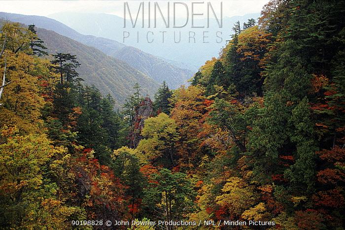 Ravine with trees in autumn colours Shokawa, Japan  -  John Downer/ npl