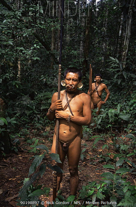 Matis hunters in rainforest, facial decorations to resemble jaguar, Amazonia, Brazil  -  Nick Gordon/ npl
