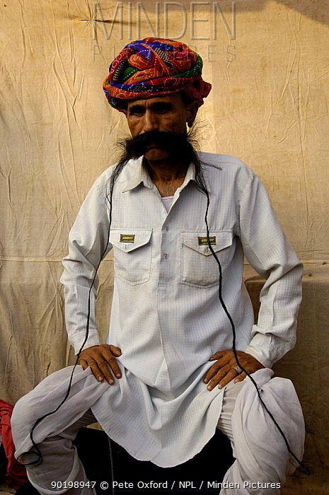 Rajasthani man showing off his long moustache Pushkar camel and livestock fair, Pushkar, Rajasthan, India, October 2006  -  Pete Oxford/ npl