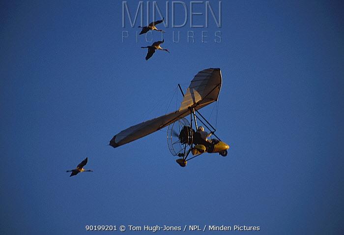 Imprinted Whooping cranes flying behind microlite (Grus americana) migration down eastern USA  -  Tom Hugh-jones/ npl