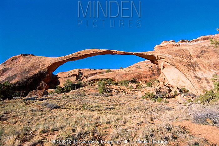 Landscape Arch created by sandstone erosion Arches NP Utah USA  -  Georgette Douwma/ npl