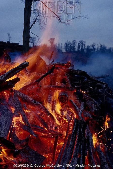 Aftermath of storm burning fallen trees woodland management UK  -  George Mccarthy/ npl